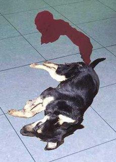 Köpeklerde enterit